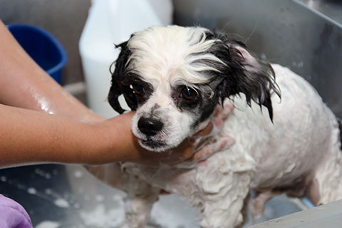 Dog wash l kalamazoo mi and for your convenience all forms of payment are accepted for our dog wash services solutioingenieria Choice Image